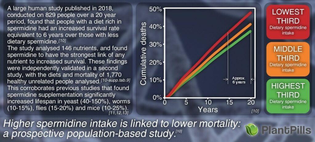 Spermidine Human Study